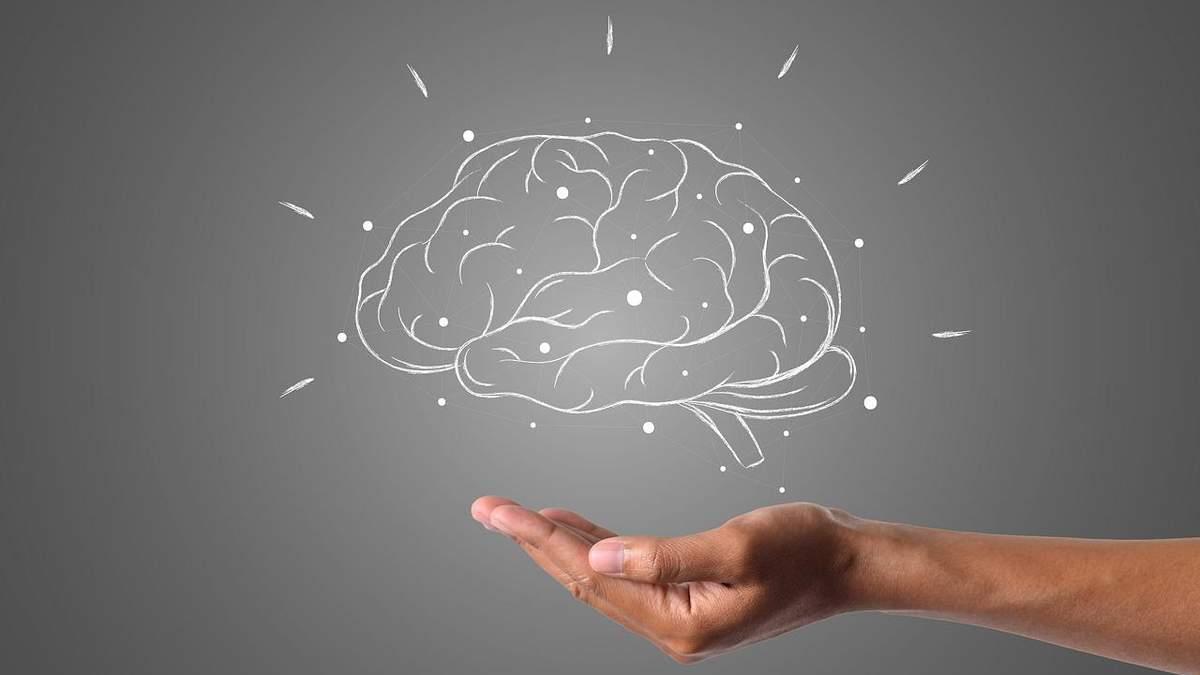 Все о мозге человека