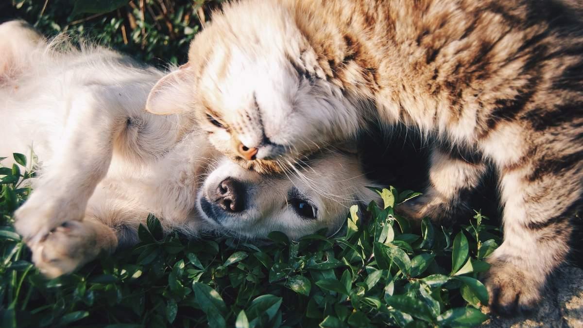 Безпечна терапія тварин