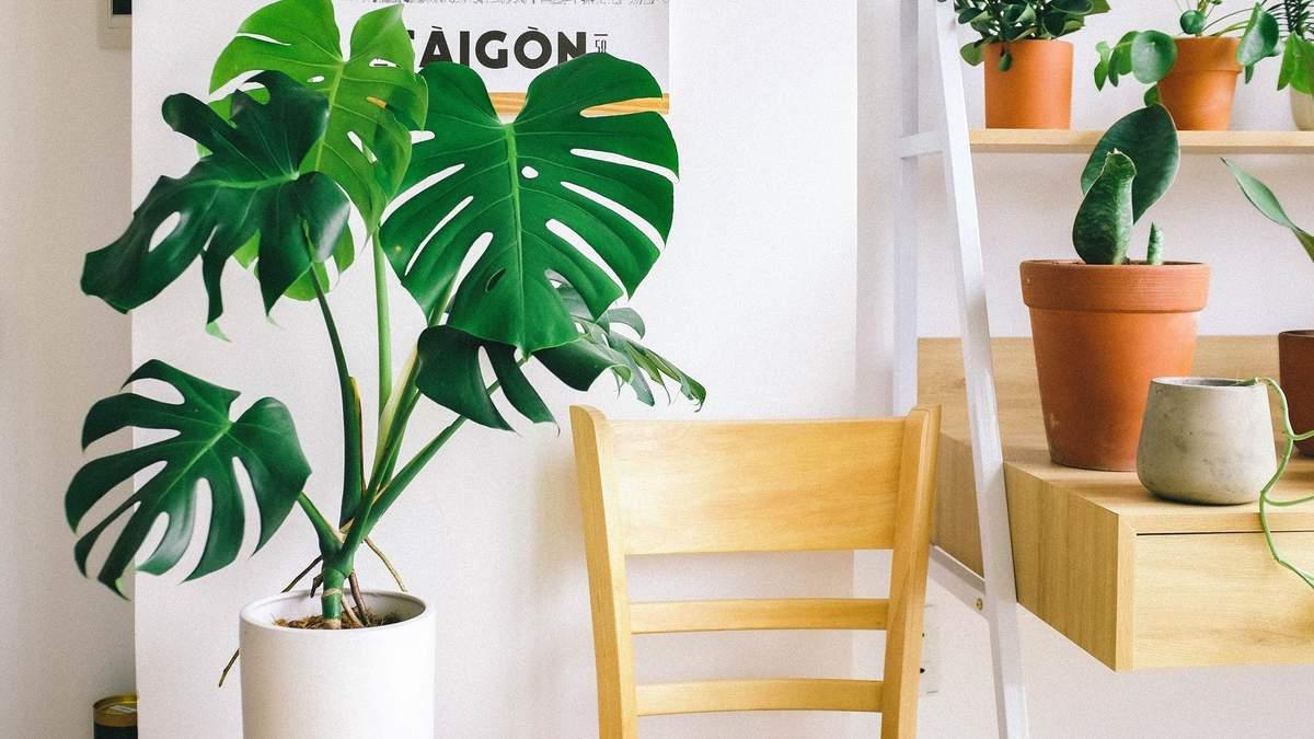 Які рослини допоможуть очистити повітря вдома