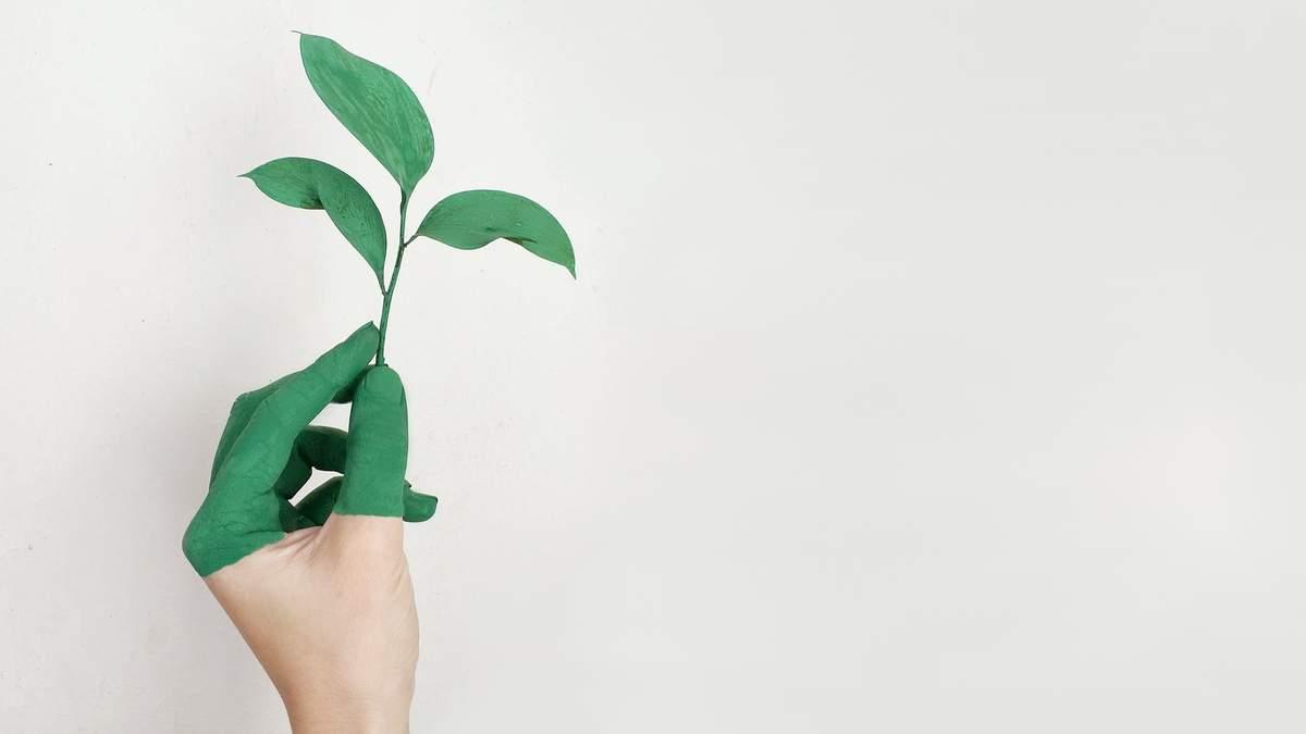 Як відмити зеленку з різних поверхонь
