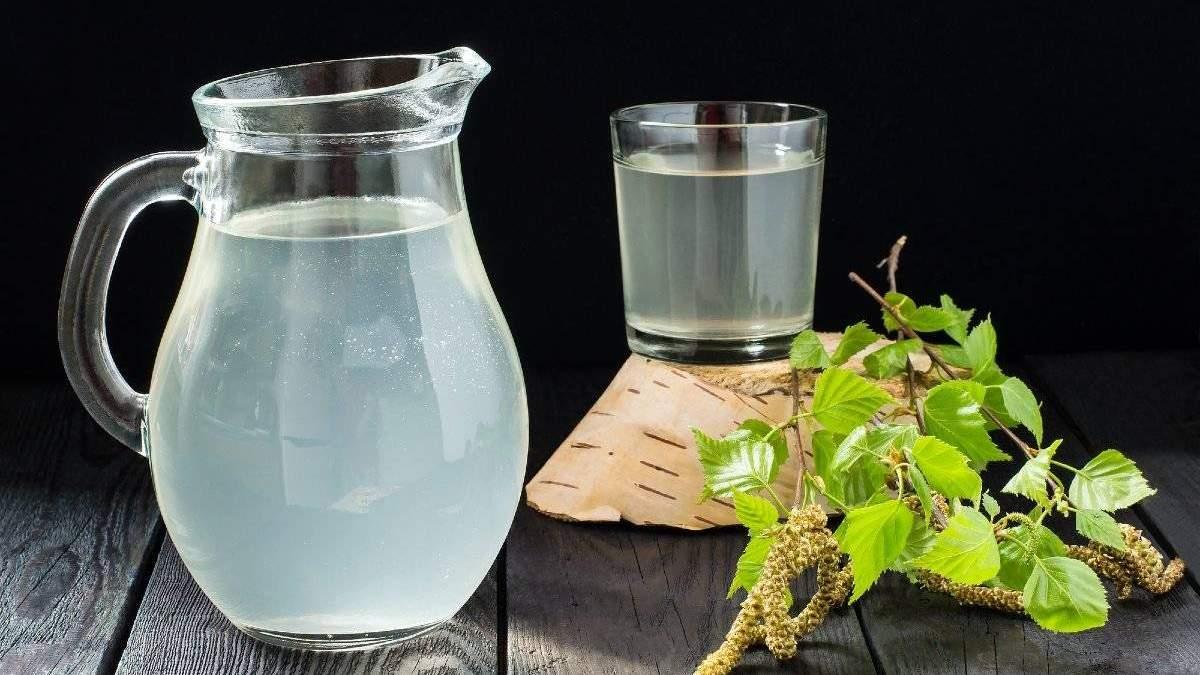 Когда и как собирать березовый сок в 2021: видео, фото