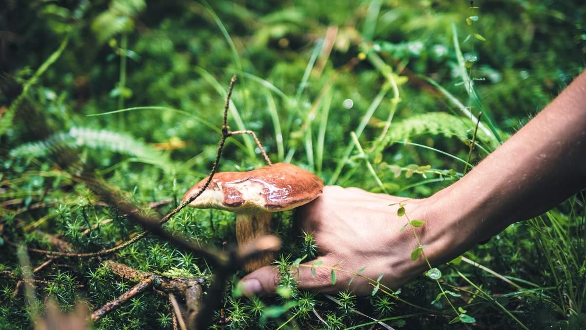 Як відрізнити їстівні гриби від отруйних
